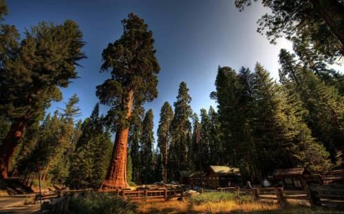"""Національний парк """"Секвойя"""" в Каліфорніїї"""