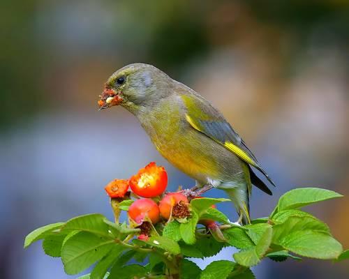 шум, птахи, рослини, насіння, Нью-Мексико, дослідження