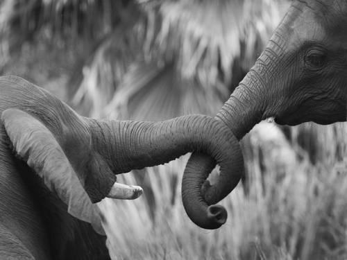 Шрі-Ланка, перепис, слон, природоохорона служба