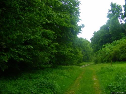 ООН, ліс, лісовий сектор, інфестиції, 40 млрд