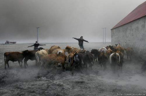 Ісландія, виживання, консерватизм, вулкан
