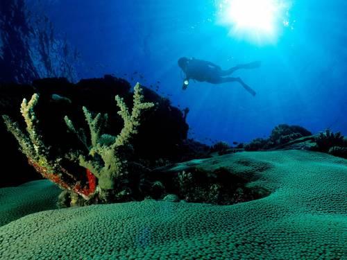 IUCN, експедиція, підводні гори, Західно-Індійський хребет