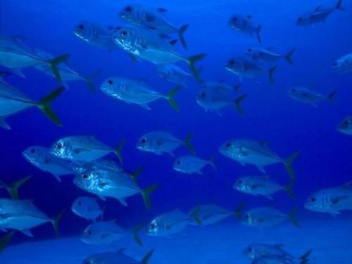 """Риби донесли радіацію з """"Фукусіми"""" до США раніше, ніж вода та вітер"""