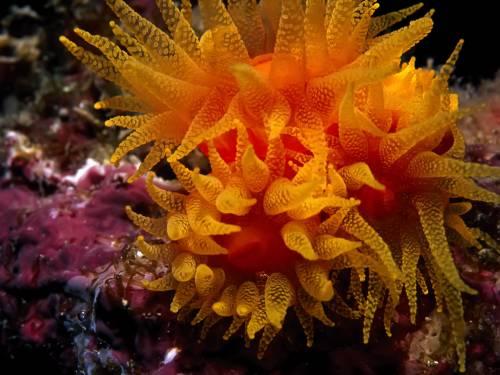вимирання, глобальні проблеми людства, морське життя, моніторинг