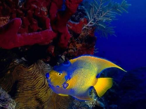Сейл, корали, риф, екосистема