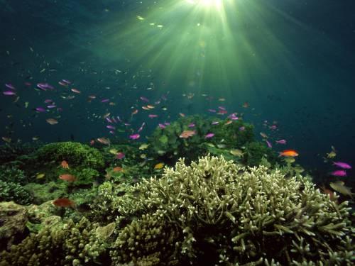 Корали гинуть через органічні забруднення