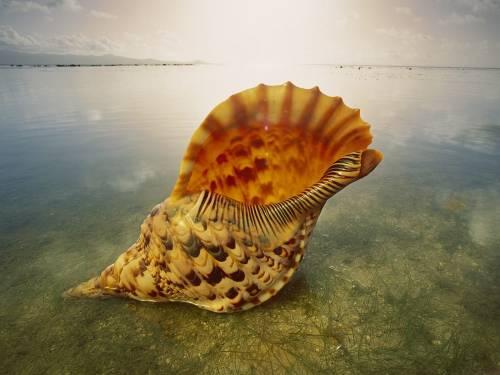 Земля відновилася після найбільшого за 10 млн років вимирання видів