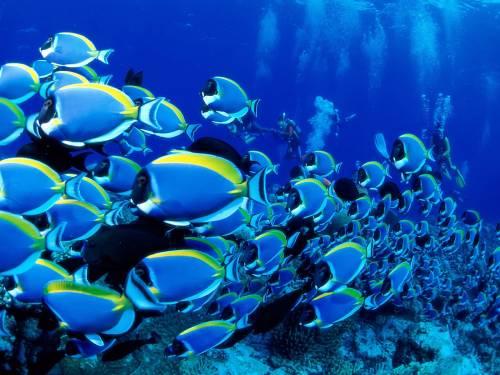 Гаваї, риба, риболовля, сталий розвиток