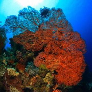коралові рифи, загроза, зникнення, глобальні прблеми,