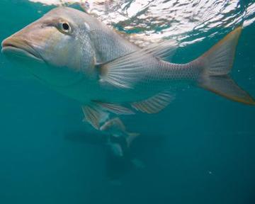 Світовий океан, ресурси, океану, рибні ресурси, ферми