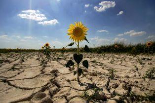 17 червня, Всесвітній день, опустелювання, посуха, Україна
