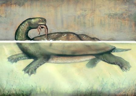 Вперше описана гігантська прісноводна черепаха Південної Америки