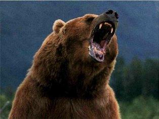 Єллоустон, національний парк, США, ведмідь, грізлі