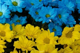 День Незалежності, 24 серпня, Україна, вітання, святкування