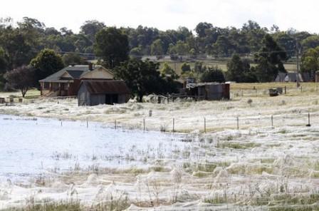 павуки, Австралія, Нашестя, ентомологи, повінь