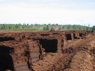торф, торфовища, екологи, президент, Янукович