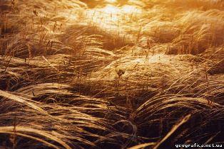 Органічні злаки не нагодують Землю