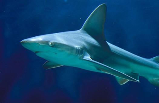 Акула вимирання світ модель