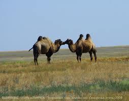 природні умови, природні ресурси, Північна , Центральна Азія, Алтай, Саяни, Узбекистан