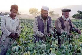 Південно-Західна Азія, сільське господарство, Рослинництво, тваринництво, опіумний мак, плодові насадження, Саудівська Аравія