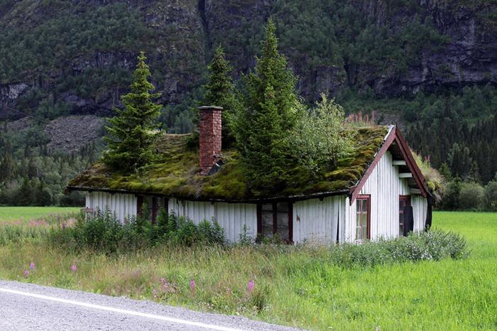 зелений дах, екологічне будівництво, архітектура