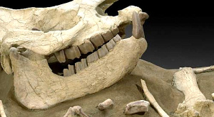 Динозаври знаходилися на шляху до вимирання до падіння метеорита