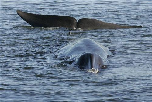 кит, фінвал, фіорд , Данія