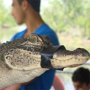 крокодил, курйоз, Німеччина, несподіванка