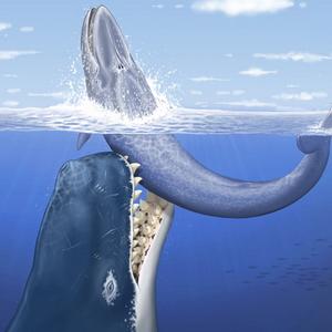 палеонтологія, Левіафан, кашалот, стародавній кит