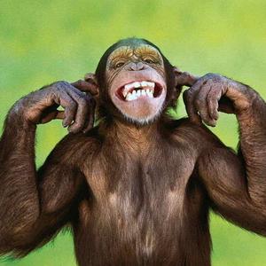 еволюція, шимпанзе, захоплення території
