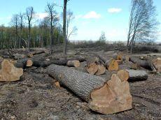 Чернечий ліс, акція, Київ, шипування дерев