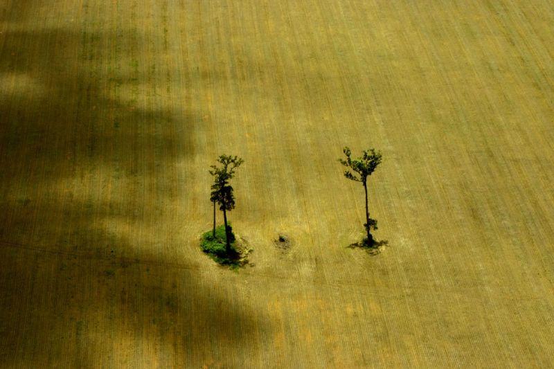 вирубка, ліс, Центральна Африка, обезліснення, банту