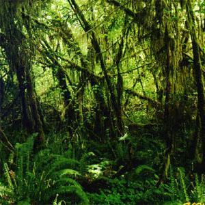 тропічні ліси, обезліснення, біорізноманіття