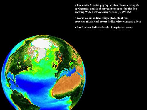 глобальне потепління , Світовий океан, фітопланктон