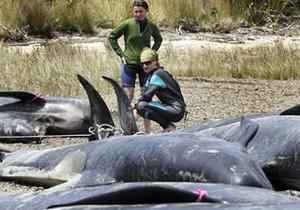 В Мексиканській затоці побільшало суїцидів серед китів і дельфінів