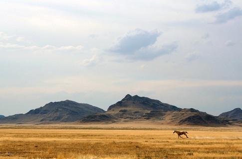 думка експертів, Україна, кліматичний пояс, пустеля