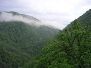 Зміна клімату в Вірменії, відновлення лісу, кліматична програма