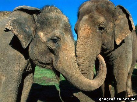 Масаї-Мара, Кенія, Африка, національний парк, популяція