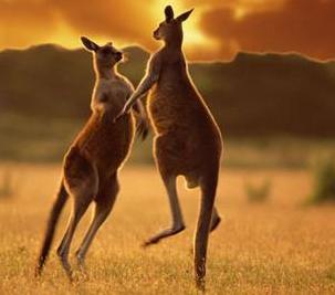 Австралія тваринний світ