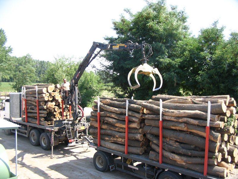 Лісовиробничий комплекс України, Лісове господарство, Целюлозно-паперова промисловість