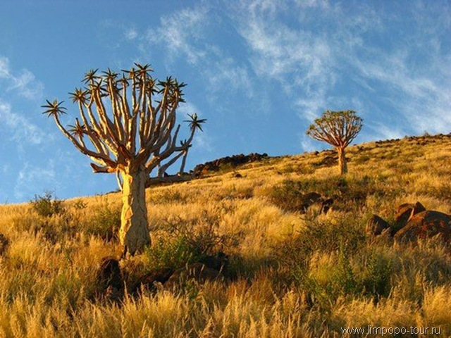 Південна африка природні умови та