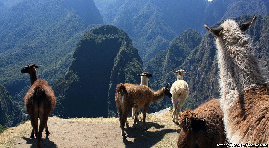 Тваринний світ південної америки