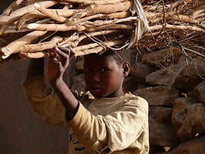 Західна Африка, сільське господарство, промисловість, Сенегал, Нігерія