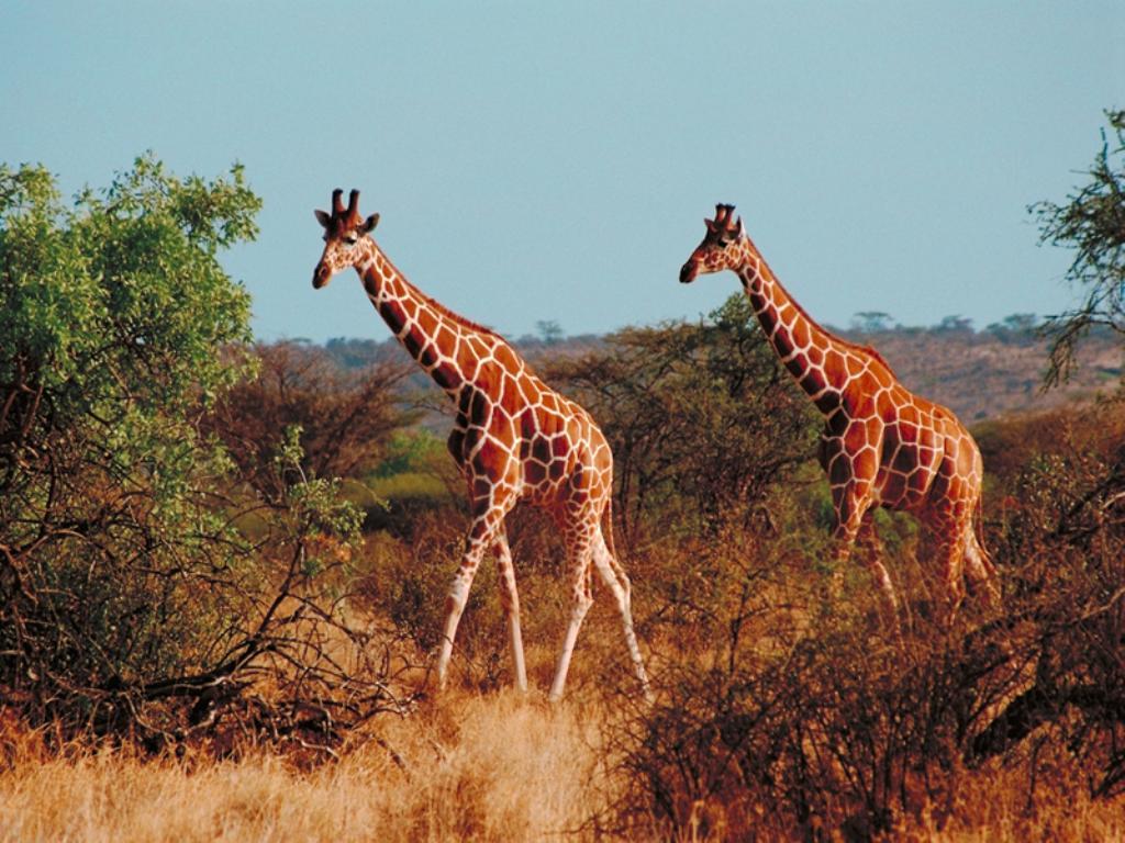 Ценотральна африка природні умови